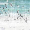 Sandestin Seagulls E by Roe Rader