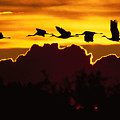 Sandhill Crane At Sunset by John Hyde - Printscapes