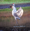 Sandhill Crane Painted by Robert Meanor