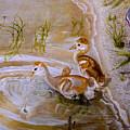 Sandhill Cranes Chicks First Bath by Zina Stromberg