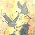 Sandhill Cranes by Dan Bozich