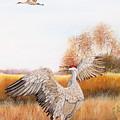 Sandhill Cranes-jp3161 by Jean Plout