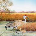 Sandhill Cranes-jp3162 by Jean Plout