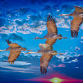 Sandhill Cranes by Larry White