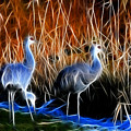 Sandhill Cranes Pair Fractal by Lawrence Christopher