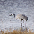 Sandhill On The Shore by Jeff Swan