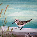 Sandpiper And Conch by Jane Williams Clayton