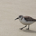Sandpiper At The Beach by Jean Clark