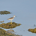 Sandpiper On Stilts by Colleen English