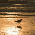 Sandpiper by Peg Urban