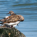 Sandpipers 2 by J M Farris Photography