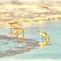 Sandpipers Along The Shoreline by Betsy Foster Breen