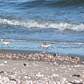 Sandpipers At The Seashore by Margie Avellino