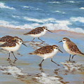 Sandpipers by Barrett Edwards