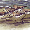 Sandpipers by Nancy Patterson