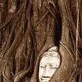 Sandstone Buddha Head Overgrown By Banyan Tree Thailand by Tanawat Pontchour