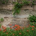 Sandstone Lilies by Dylan Punke