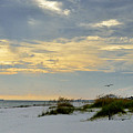 Sandy Alabama Beach by Glenda Ward