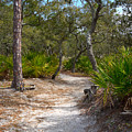 Sandy Path In Hunting Island South Carolina by Louise Heusinkveld