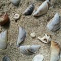 Sandy Seashells by Mayra Alvarez