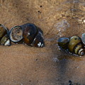 Sandy Shells by Edna Weber