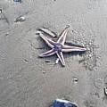 Sandy Star by Sandra Carter