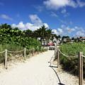 Sandy Trail Miami Florida by Olga Kurygina