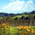 Sanford Ranch Vineyards by Kurt Van Wagner