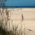 Sanibel Island Beach Fl by Susanne Van Hulst