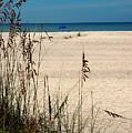 Sanibel Island Beach Fl by Susanne Van Hulst