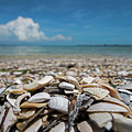 Sanibel Island Sea Shell Fort Myers Florida Broken Shells by Toby McGuire