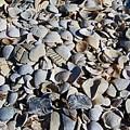 Sanibel Island Seashells I by Michiale Schneider