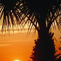 Sanibel Island Sunrise by Steve Somerville