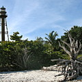 Sanibel Light And Driftwood by Christiane Schulze Art And Photography