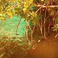 Sanibel Mangroves by Florene Welebny