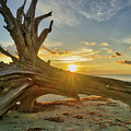Sanibel Sunrise by Joey Waves