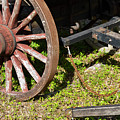 Sanibel Village Wagon Wheels by Bob Phillips