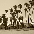 Santa Barbara Palms by Debbi Granruth