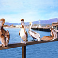 Santa Barbara Pelicans by Kurt Van Wagner