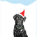 Santa Dog In The Snow by Mal Bray