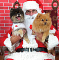 Santa Paws With Two Dogs by Sheila Fitzgerald