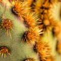 Santa Rita Prickly Pear by Susan Rissi Tregoning