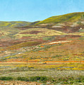 Santa Ynez Mountains Wildflowers by Kyle Hanson