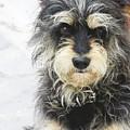 Santorini Dog by Debra Cox
