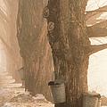Sap Buckets. Underhill, Vermont by George Robinson