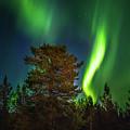 Sapmi Park Tree Under The Northern Lights Karasjok Norway by Adam Rainoff
