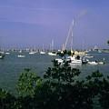 Sarasota Bay Harbor by Gary Wonning