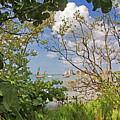 Sarasota Bay by HH Photography of Florida