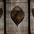 Sassafras Leaves With Wicker by Michelle Calkins