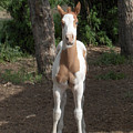 Sassy Filly by Andrea Lawrence